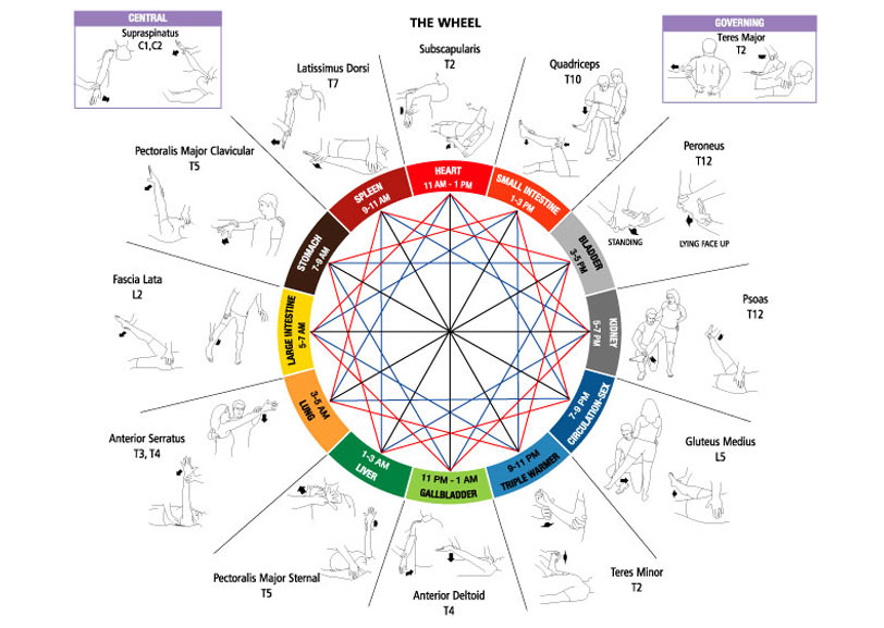 Touch-for-Health-(The-Wheel-diagram)