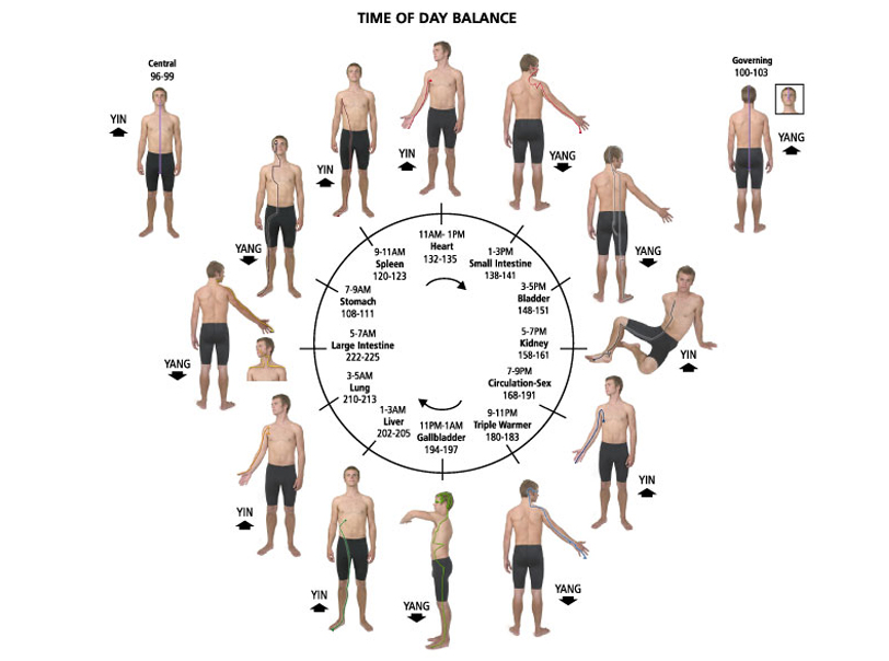 Touch for Health (Time of Day Balance - chart)